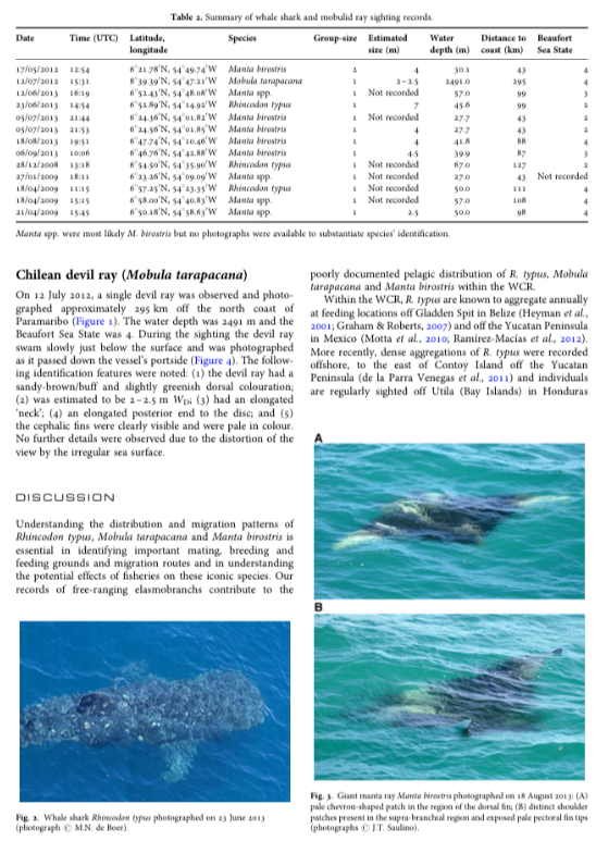 New records of whale shark (Rhincodon typus), giant manta ray (Manta birostris) and Chilean devil ray (Mobula tarapacana) for Suriname