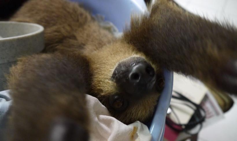 Beertje Taking Selfie, Help us Fund-Raise!