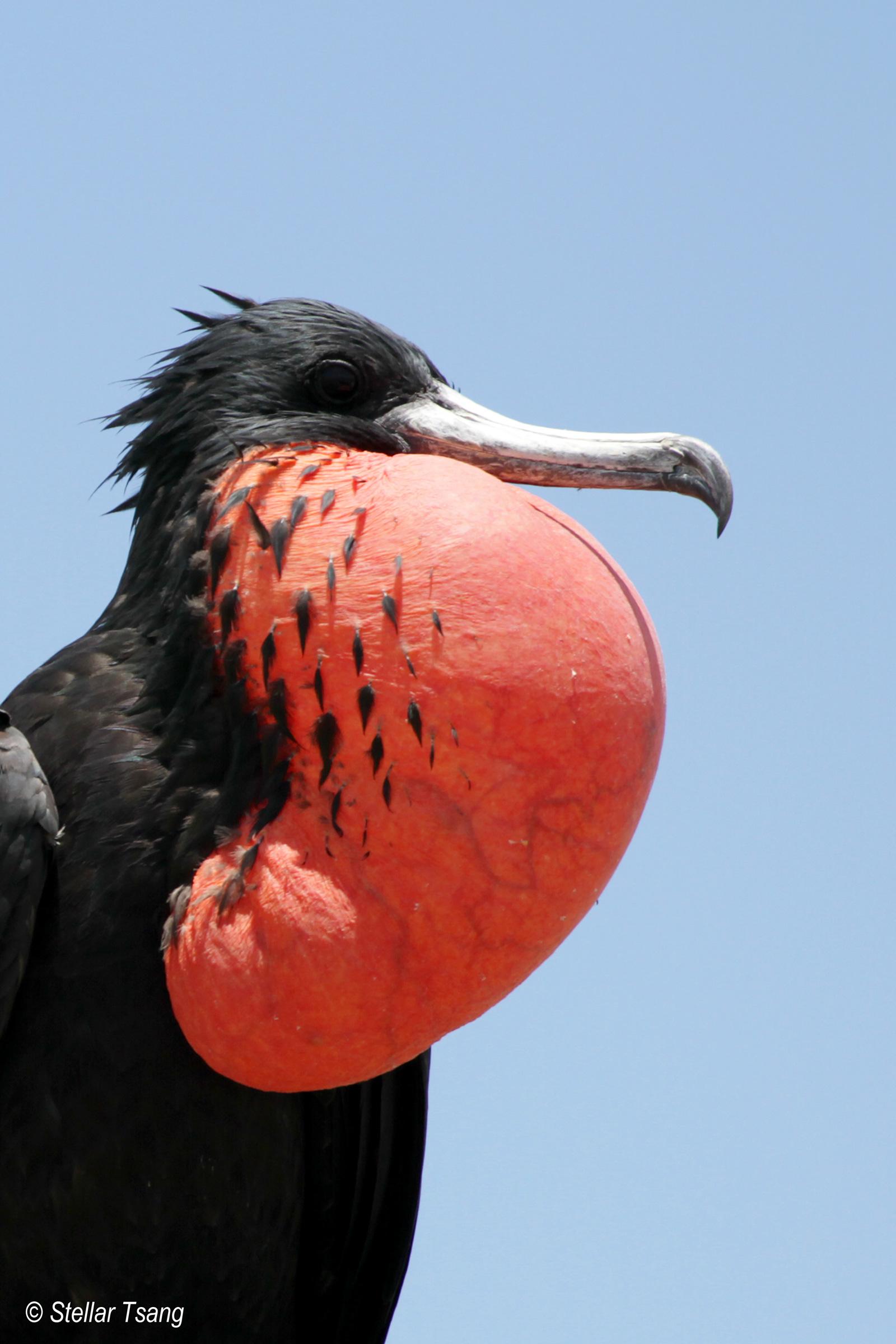 Suriname Bird