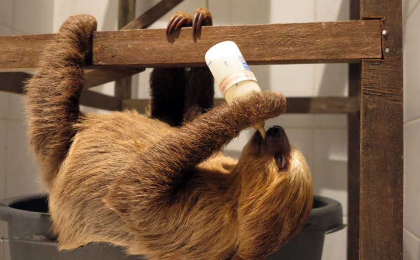 International Sloth Day picture report