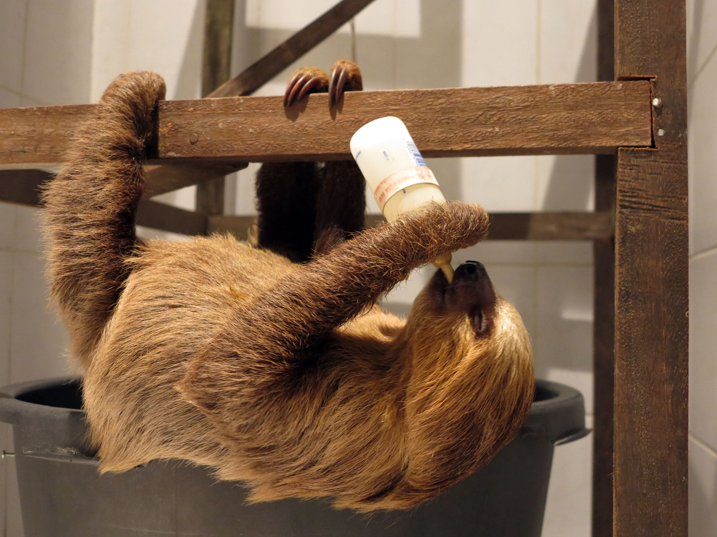 Help a sloth like this guy!