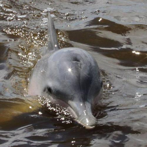 Hello Dolphin