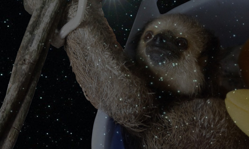 One Little Bright Star was added to the Constellation of Sloth