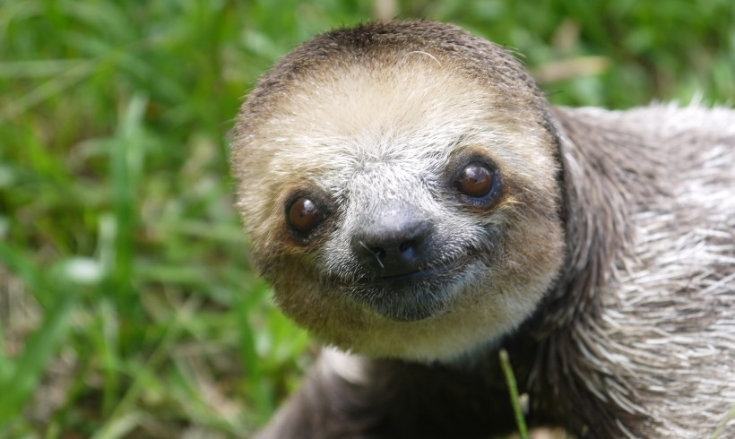 Sit Back and Relax, it's International Sloth Day!