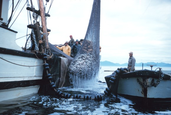 Suriname again votes for whaling 1