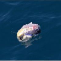 In 2050 is er meer plastic in de oceaan dan vis