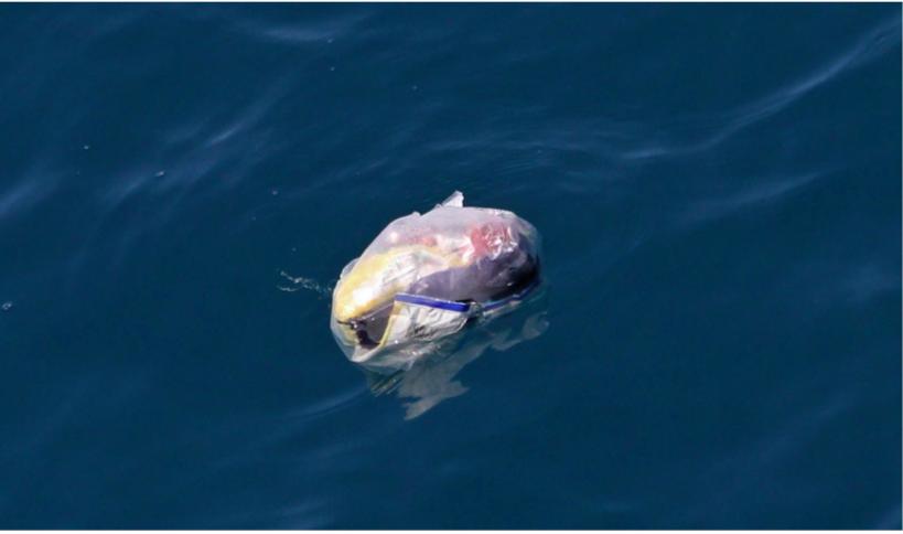 In 2050 is er meer plastic in de oceaan dan vis 1