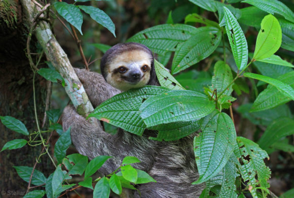 Picture Report Sloth Wellness Center 1 1