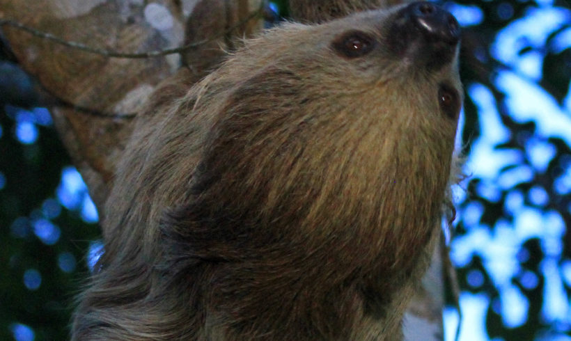 Science Advances publish about Ground Sloth Hunt