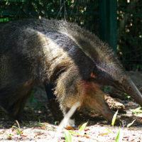 Picture Report Sloth Wellness Center 4 – Igor