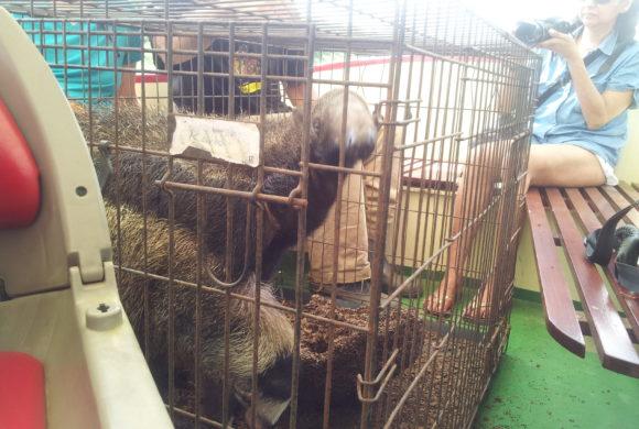 Picture Report Sloth Wellness Center 4 - Igor 4