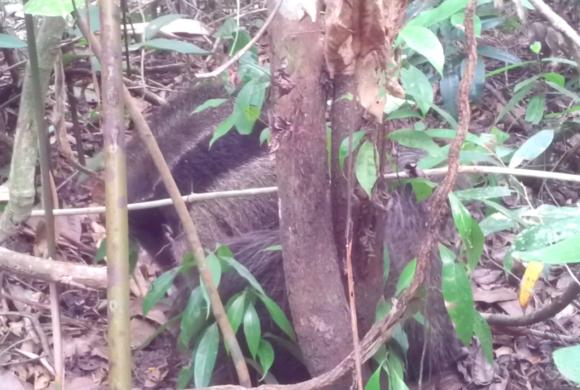 Picture Report Sloth Wellness Center 4 - Igor 2