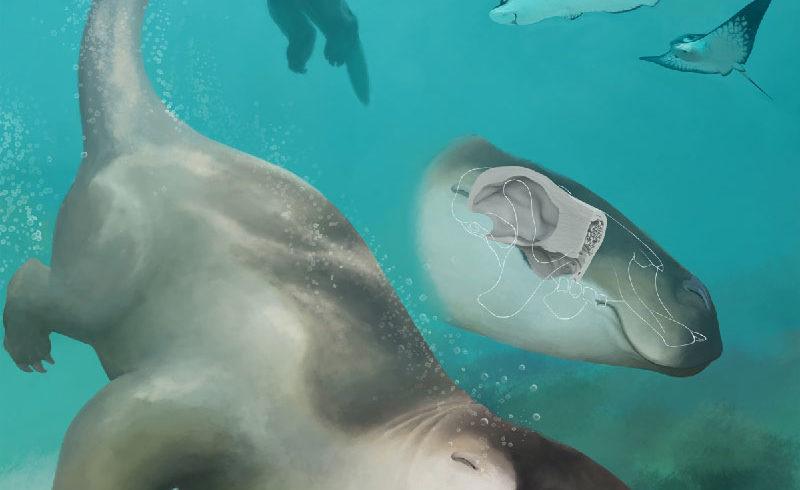 Opmerkelijke studie over zwemmende voorouders van de luiaards