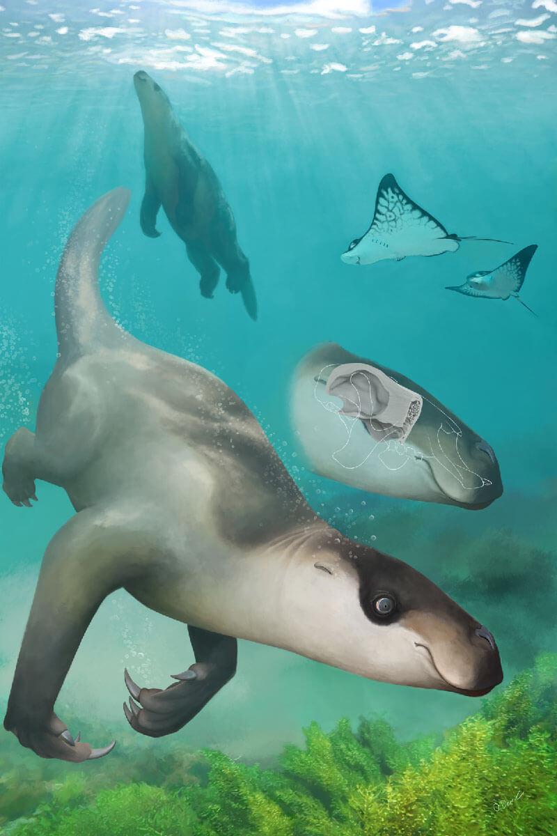 Amazing study about Swimming Sloth Ancestors 1