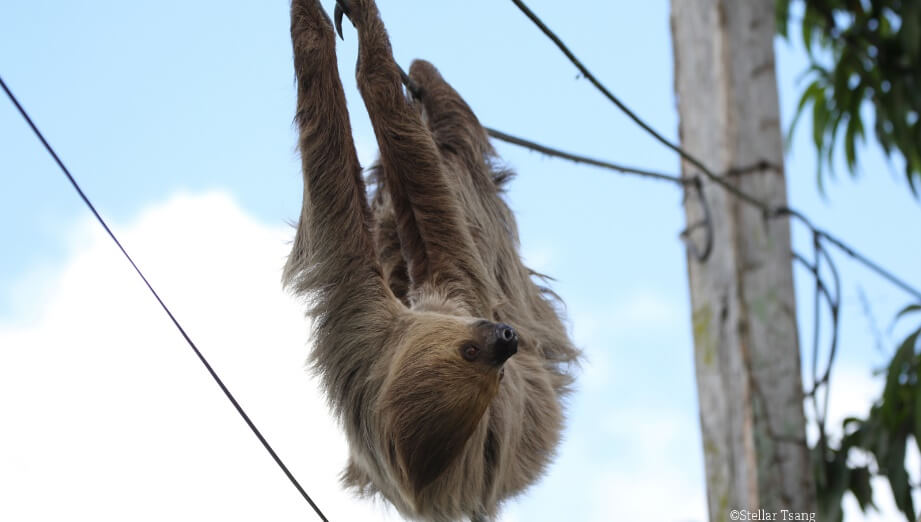 Wildlife Welfare and Sloths 2