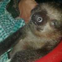 Wildlife Welfare and Sloths