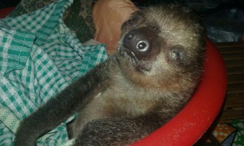 Wildlife Welfare and Sloths